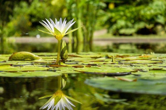 Les Jardins Aquatiques à Quincié-en-Beaujolai