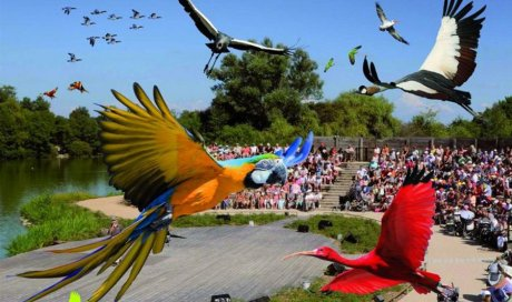 Découverte Parc des Oiseaux Beaujolais